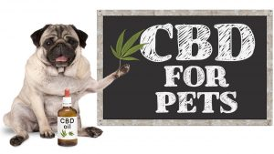 CBD For Pets: Understanding the Benefits, Precautions, and Side Effects