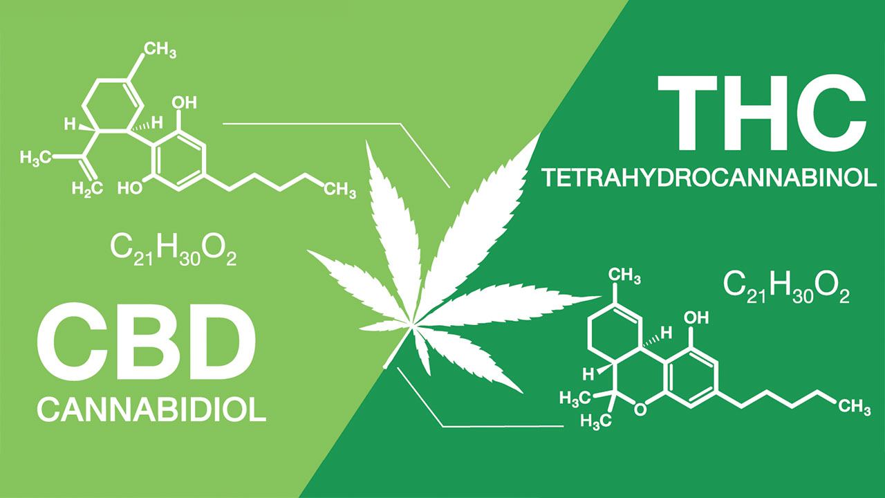 What's the Difference Between CBD and THC?