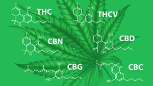What are Cannabinoids (and Why Are They Important)?