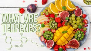 What Are Terpenes (and Their Role in the Entourage Effect)?