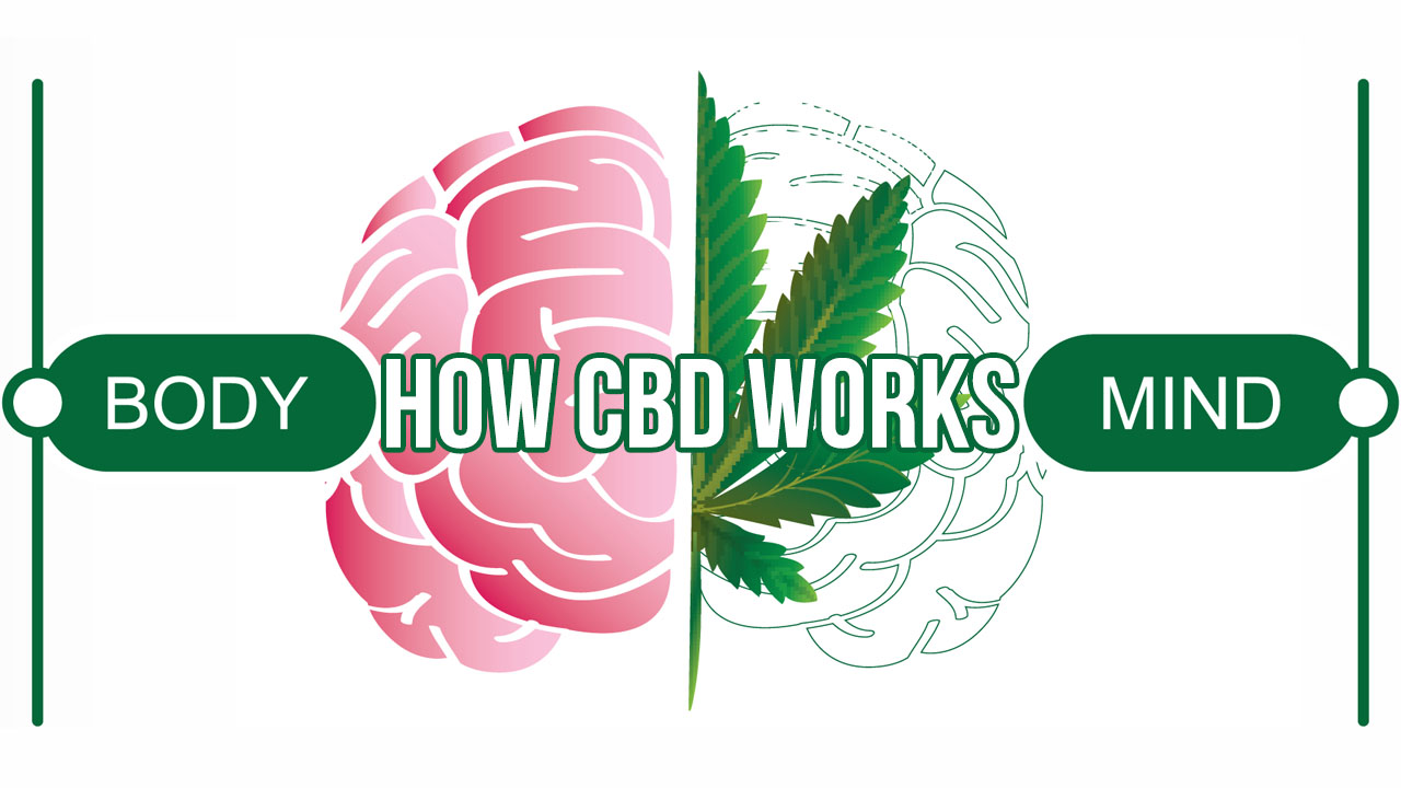 How CBD (Cannabidiol) Works in the Body