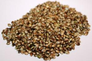 Agropro Hemp Seed